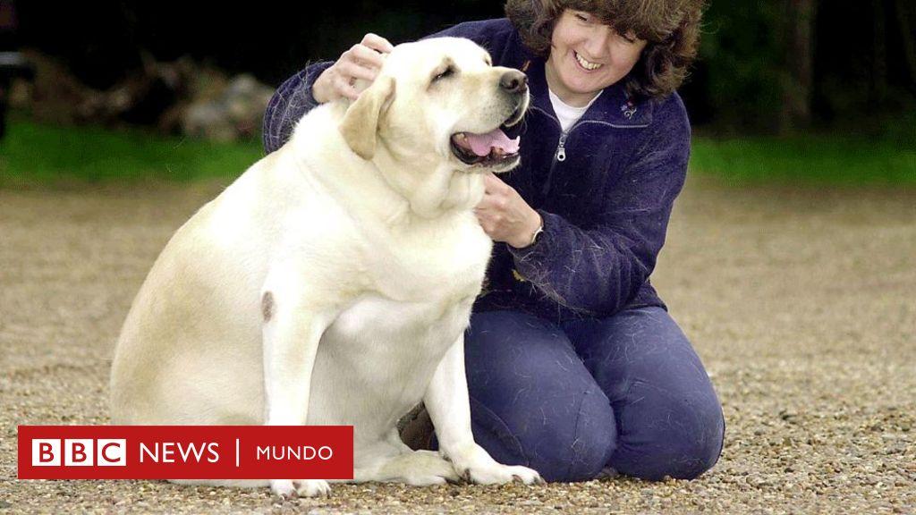 dieta casera para perros obesos