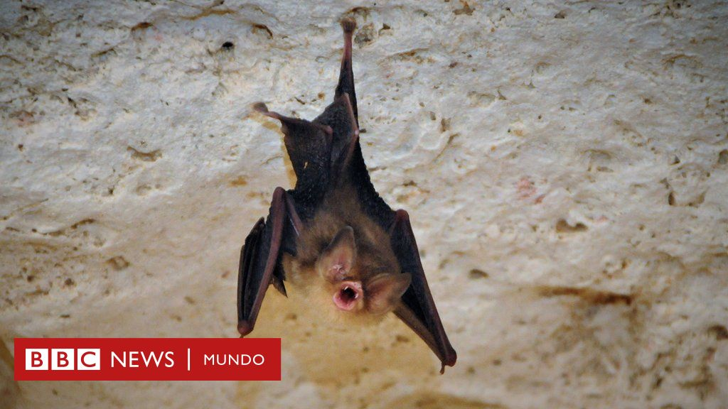 El manicure que está ayudando a preservar una rara especie de murciélago en Cuba