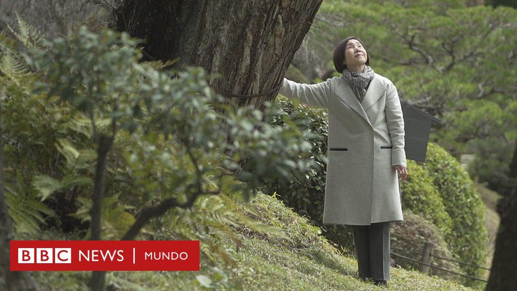Hiroshima: los árboles que sobrevivieron a la bomba atómica y hoy siembran un mensaje de paz en el mundo (también en América Latina) - BBC News Mundo