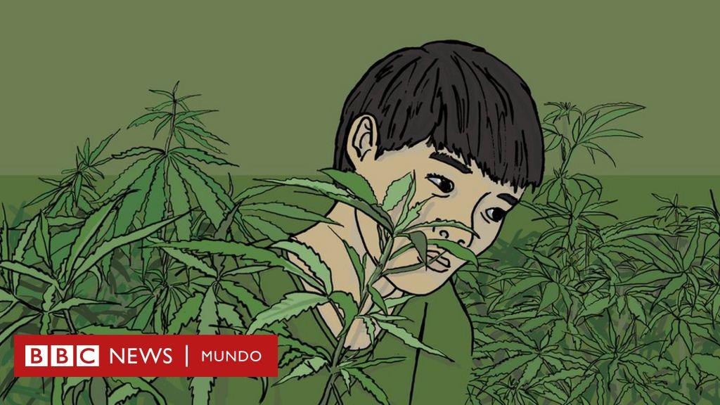 La impactante historia de un niño indigente de Vietnam que se convirtió en esclavo en una granja de marihuana en Reino Unido
