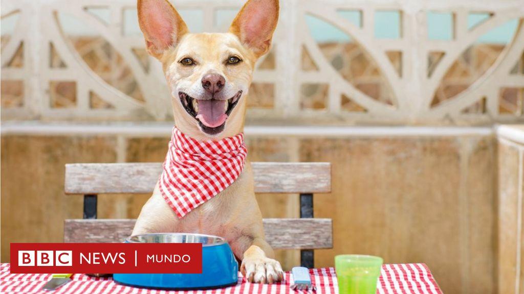 Dieta para perros mal del higado