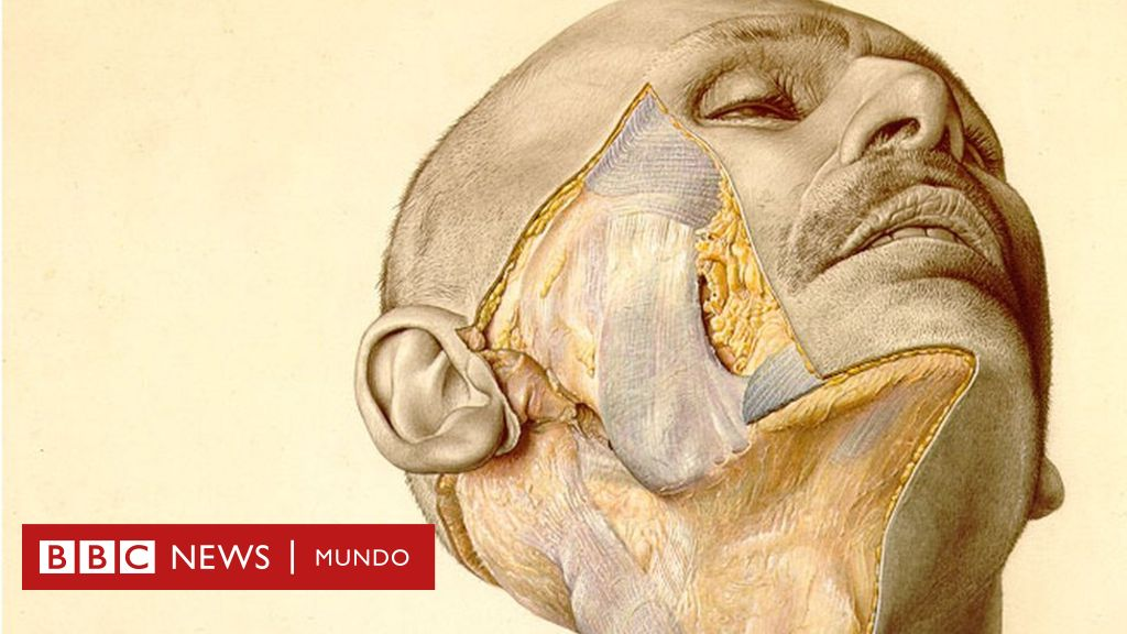 dolor en la ingle cuerpo ilustrado