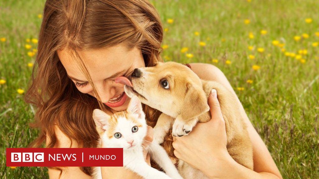 los seres humanos no pueden adquirir infección por lombrices animales