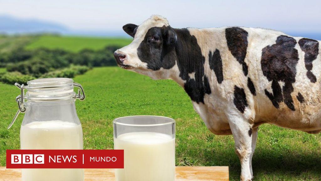 leche de soja y leche de avena