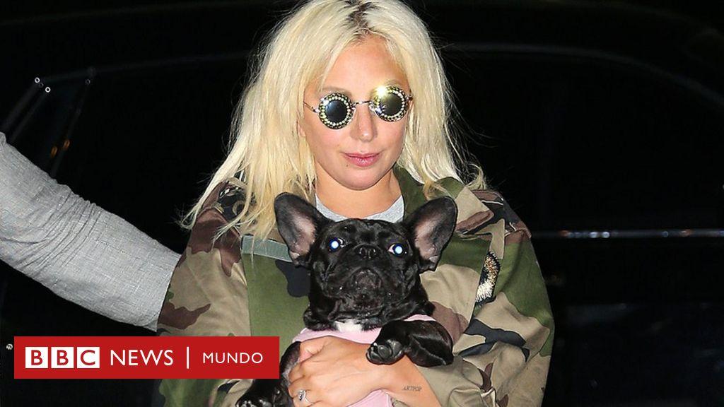 Recuperan los dos perros de la cantante Lady Gaga robados en un violento asalto en Los Ángeles - BBC News Mundo