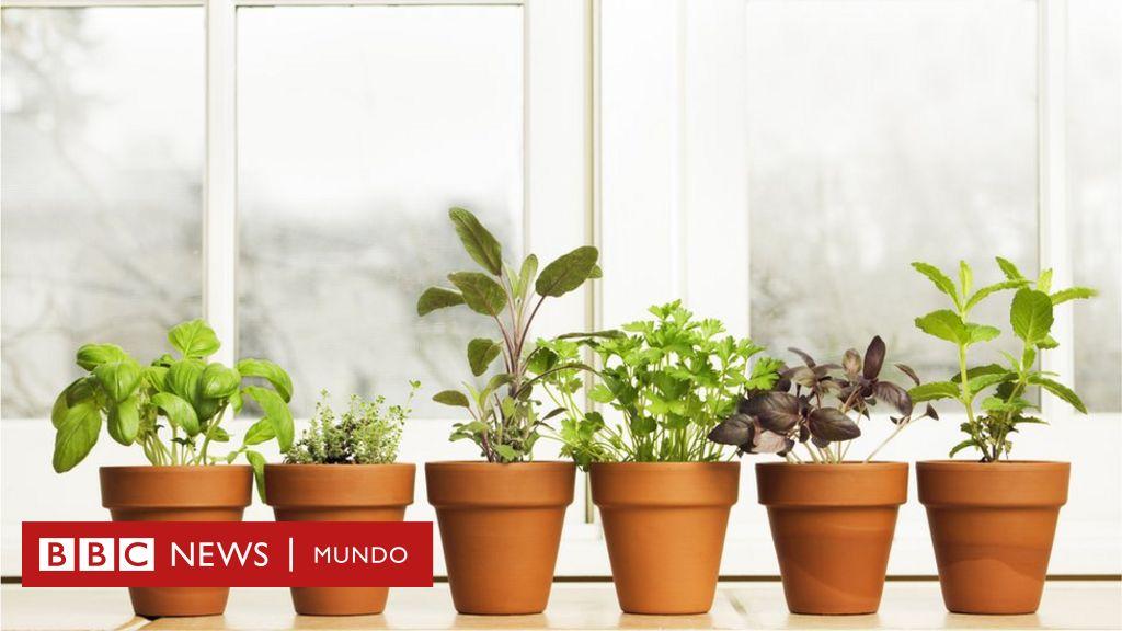 4 Problemas De Salud Comunes Que Puedes Aliviar Con Plantas Bbc News Mundo