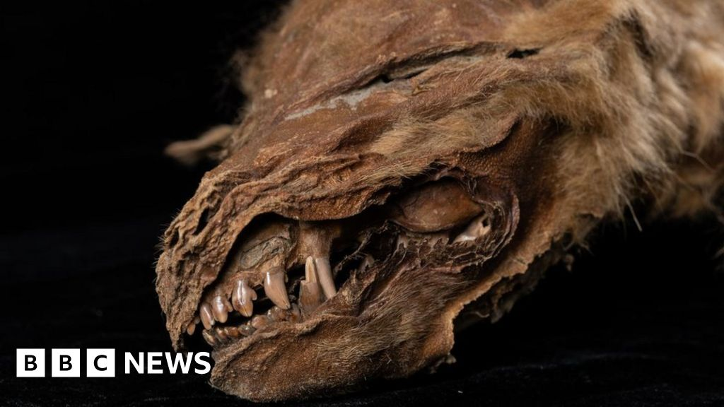 Ancient mummified wolf cub in Canada 'lived 56,000 years ago'