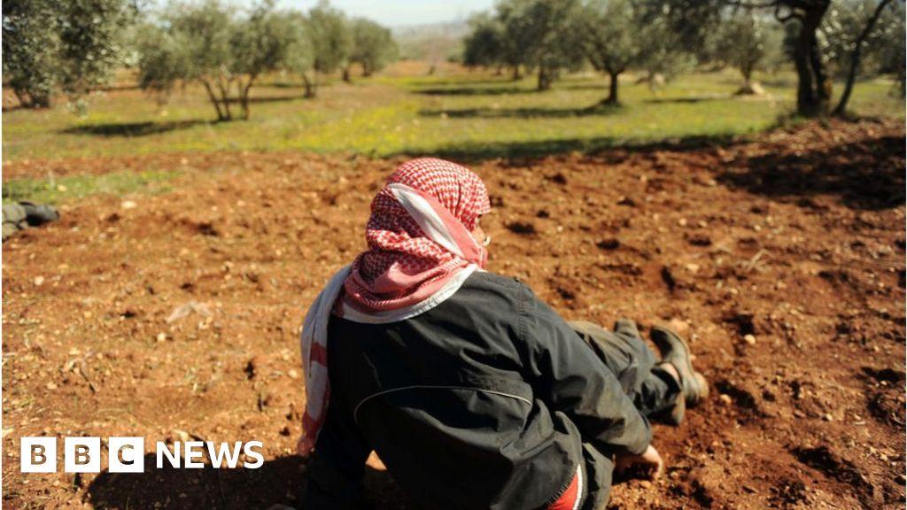 Idlib before the war: Carpets, olives and handcrafts