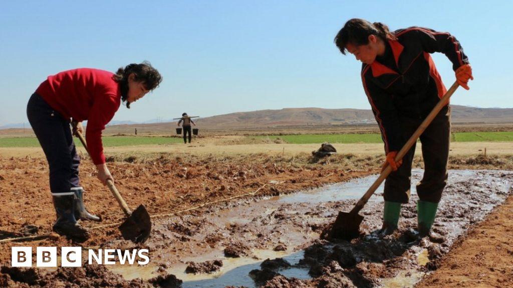 North Korea 'facing poor harvest' amid food shortages