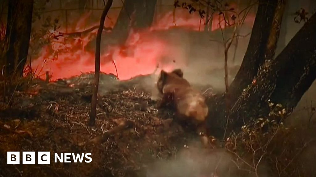 Koala rescued from fire in Australia