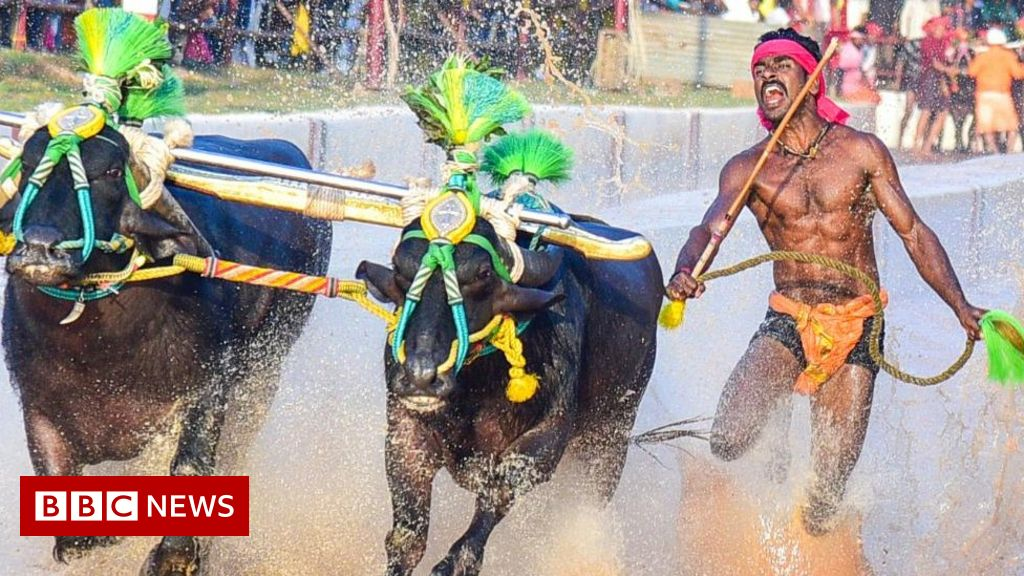 Srinivas Gowda: The Indian buffalo racer compared to Usain Bolt thumbnail