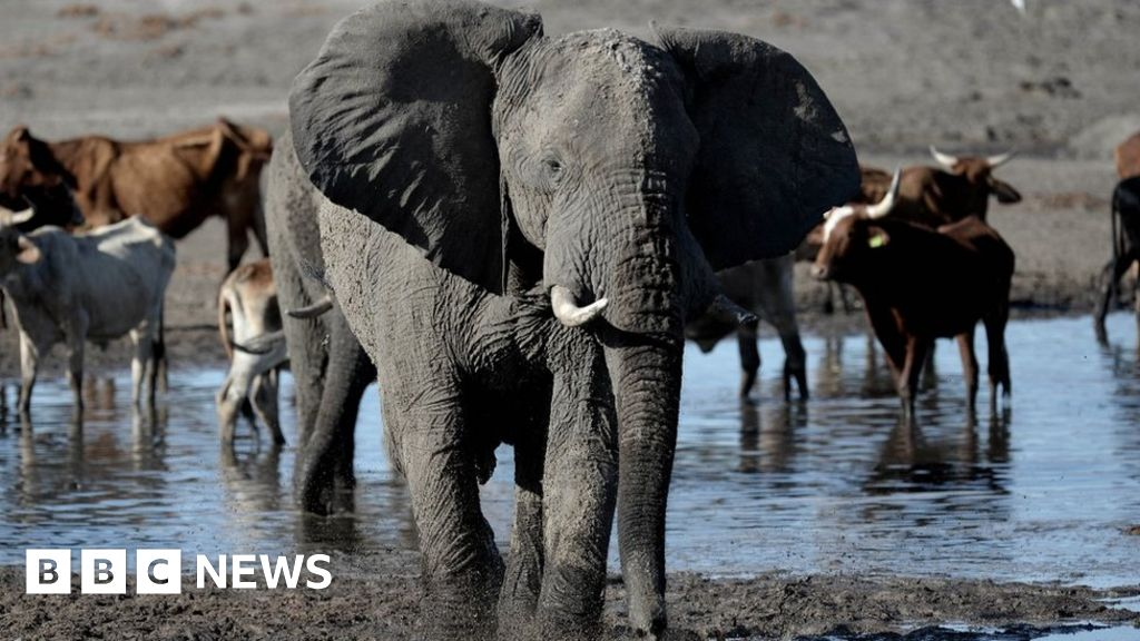 Botswana auctions off permits to hunt elephants