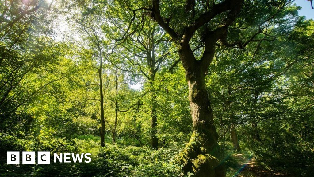HS2 could threaten irreplaceable natural habitats, report warns thumbnail