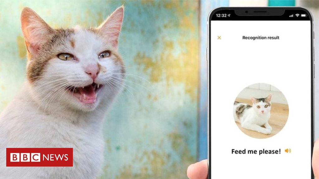 MeowTalk: Alexa developer's app to translate cat's miaow