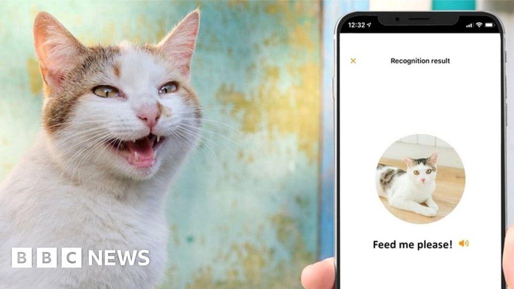 MeowTalk: Alexa developer's app to translate cat's miaow