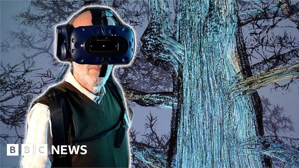 Take a VR trip inside a giant sequoia tree with 80-year-old Ted