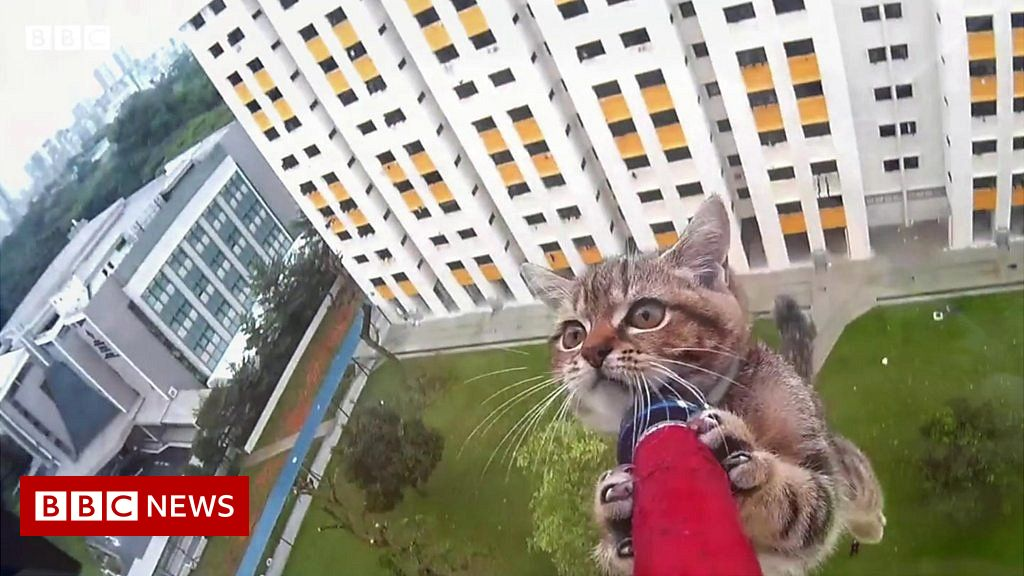 Falling Felines: Keeping Cats In High-Rise Flats Safe