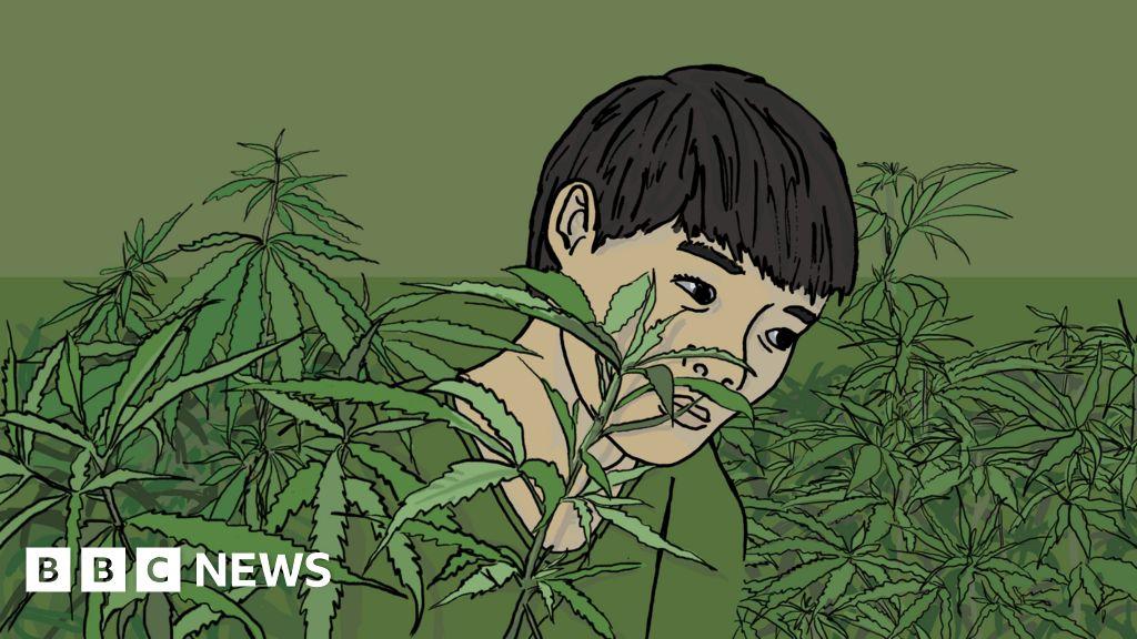 How a boy from Vietnam became a UK cannabis farm slave