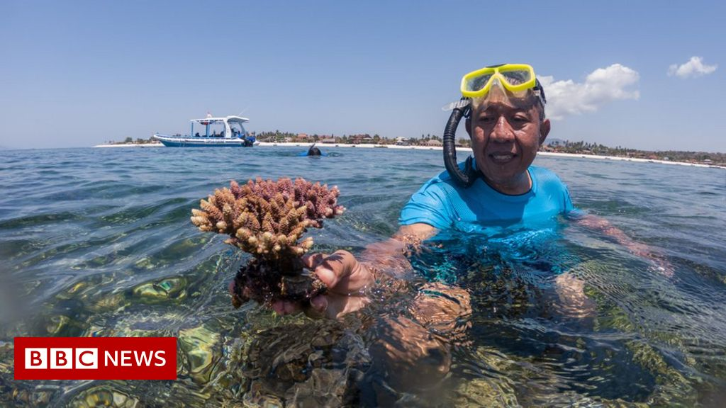 'After the coral ban, I lost everything'