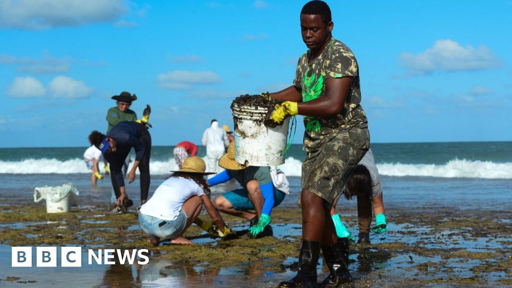 Brazil environment: Clean-up on the beaches oil spill affected