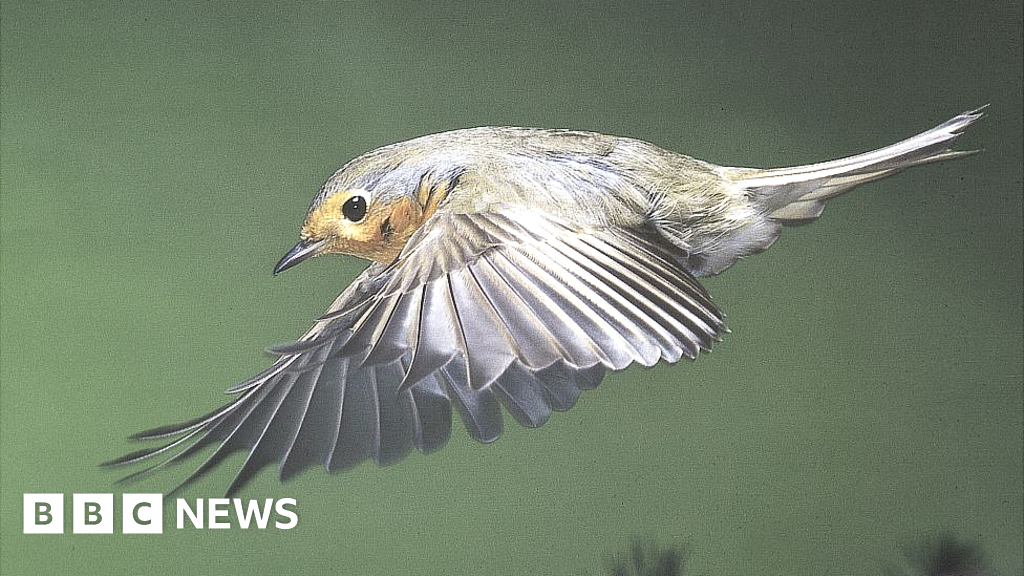 Clues to how birds migrate using Earth's magnetic field