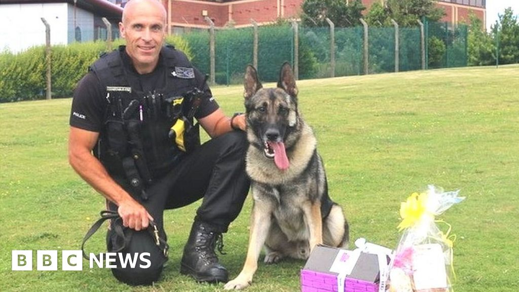 Man who stabbed police dog in Stoke-on-Trent jailed under new law