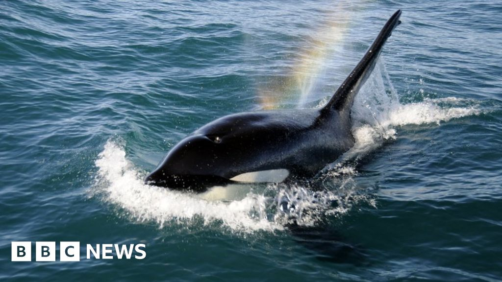 Scotland top for whale and dolphin sightings