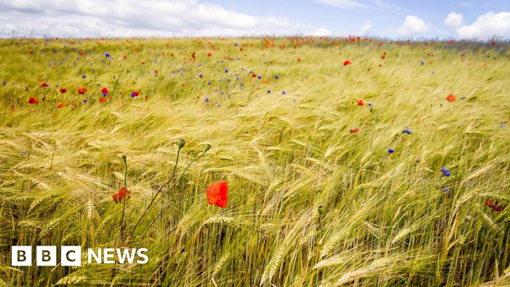 Threat to food as biodiversity declines