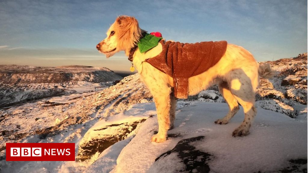 UK white Christmas declared after overnight snow