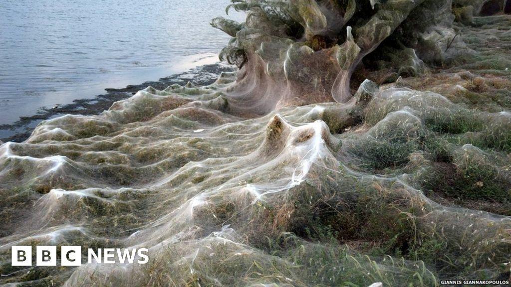 Giant spider-web cloaks Greek coast