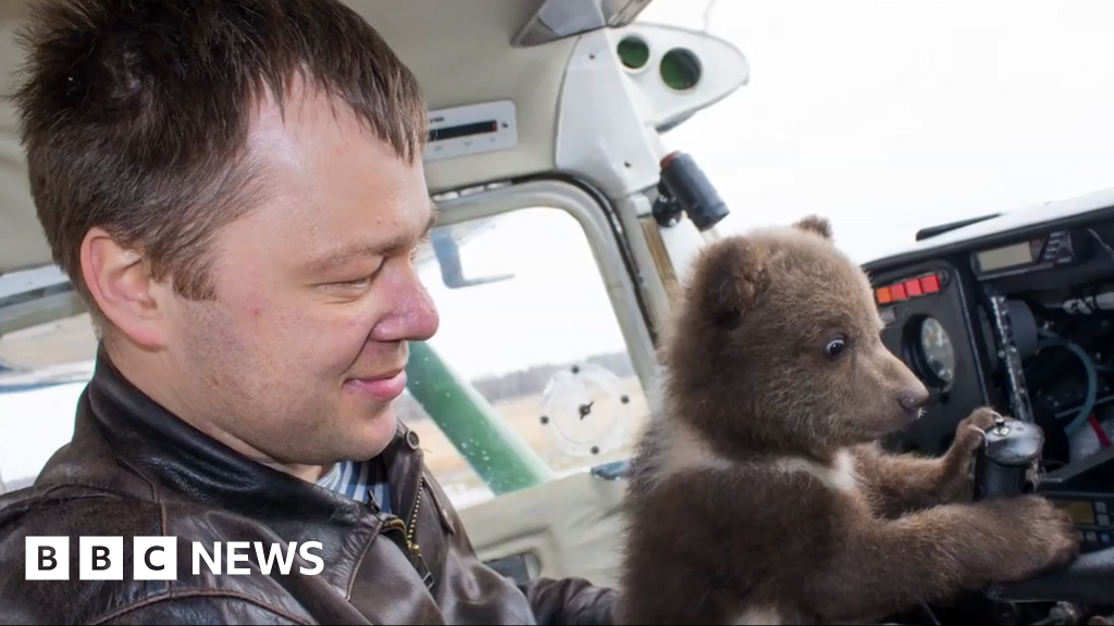 Crowdfunding campaign for Russian air bear - BBC News