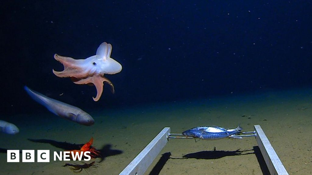 World's deepest octopus captured on camera
