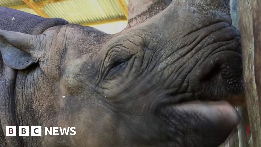 'World's oldest rhino' dies aged 57