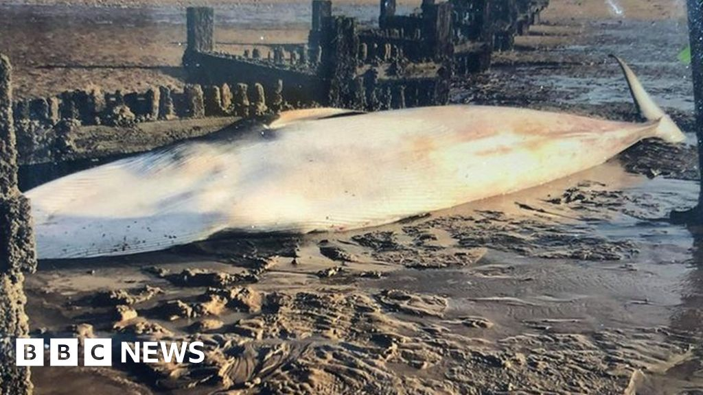 Whale carcass washes up on beach near hunstanton thumbnail
