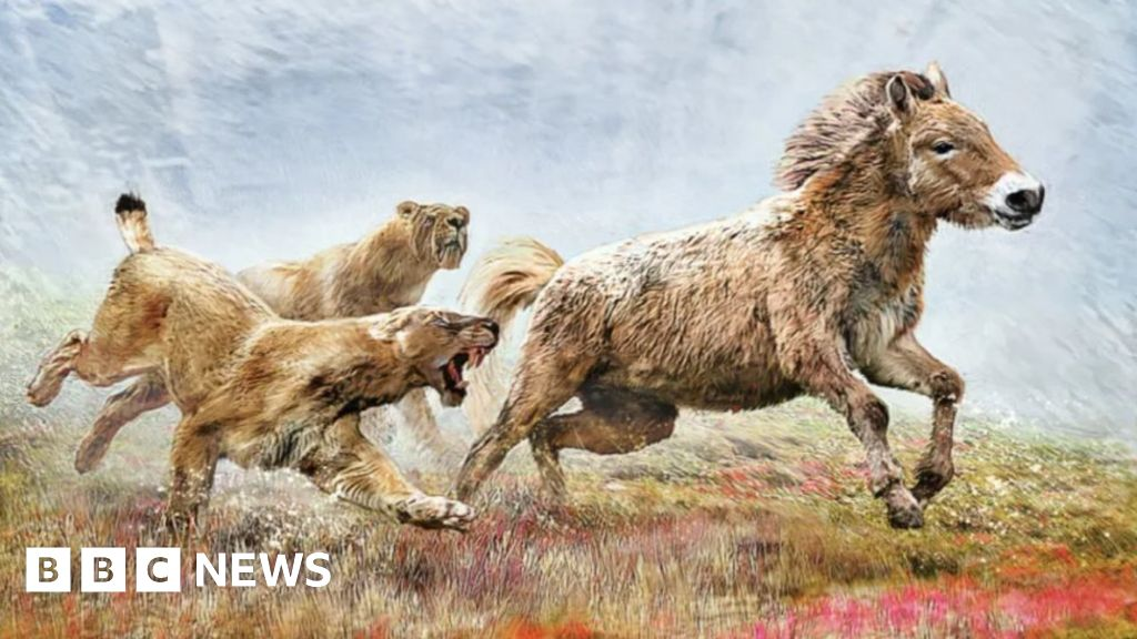 Ice age sabretooth cat revealed from bone sent to Scots scientist