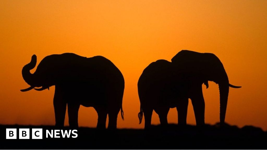 Why Botswana's election could be decided by elephants and diamonds thumbnail