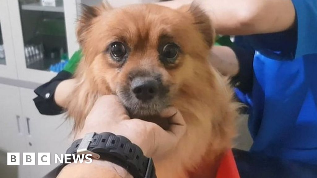 The group rescuing pets orphaned by Covid in Indonesia