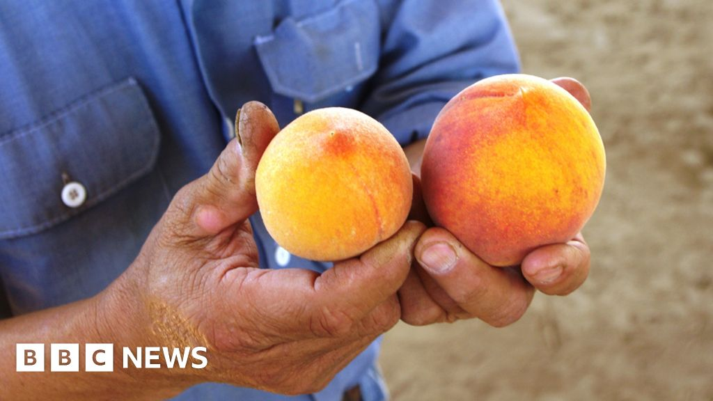 The small fruit with a big flavour - BBC News