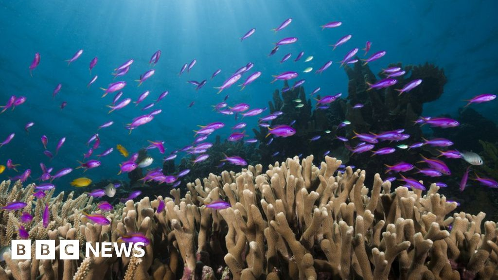 Climate change: a UN body signals a red alert on the  blue planet
