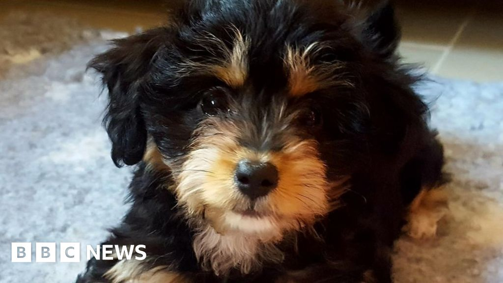 Forest of Dean: Puppy dies after two dogs attack her