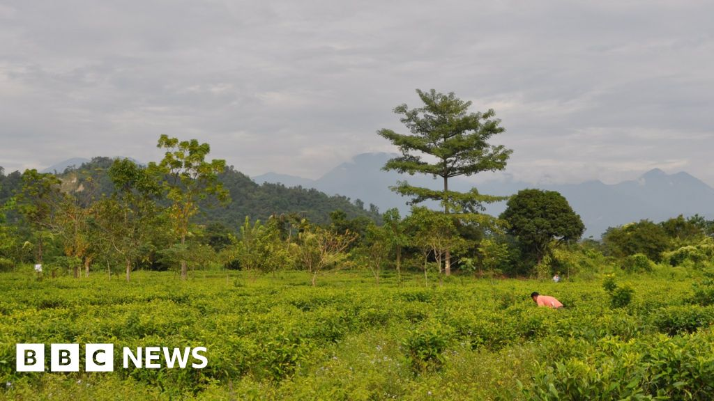 The human-elephant conflict in India\'s tea state Assam - BBC News