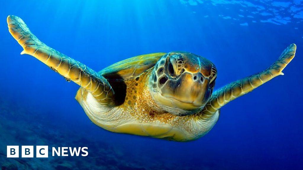 www.bbc.co.uk