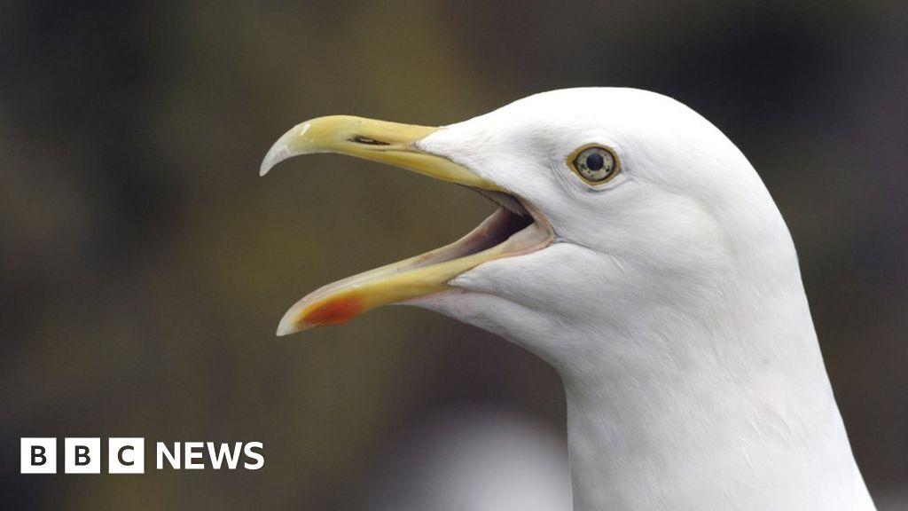 Angry gull warning as lockdown hits coastal crowds