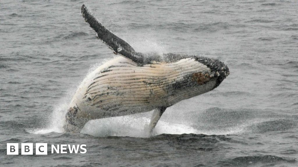 Brazil meeting votes to protect world's whale population
