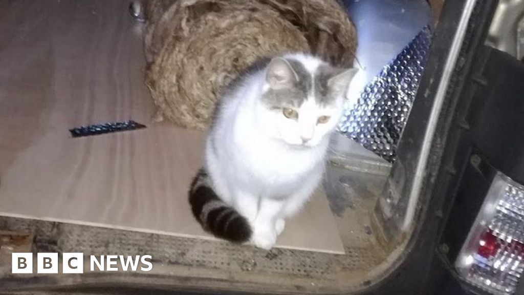 Cat owner 'disgusted' at dog owner's sentence