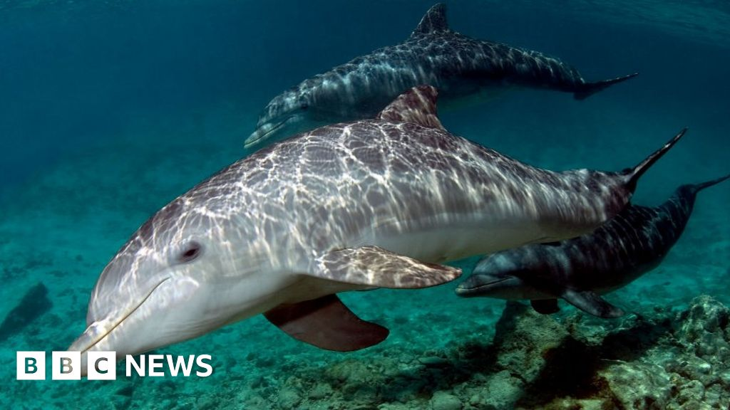 Dolphins exposed to 'cocktail of pollutants' in English Channel