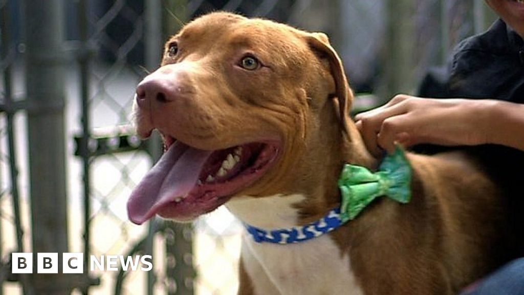 """Bow ties dogs in animal shelters for a """"second chance"""""""