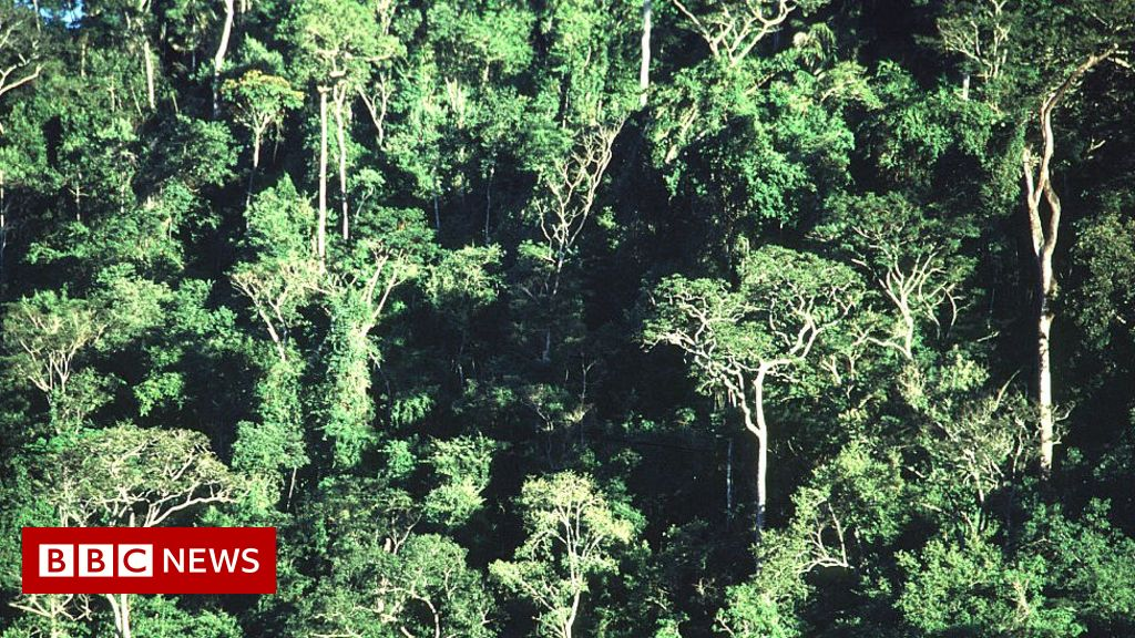 Forests the size of France regrown since 2000, study suggests
