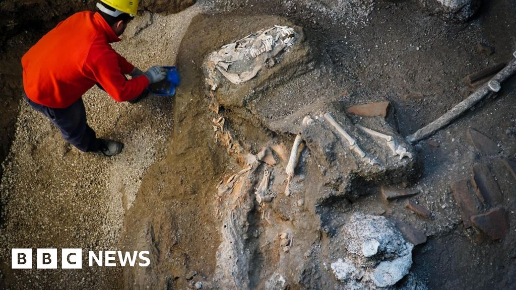 Horse found in harness at Pompeii