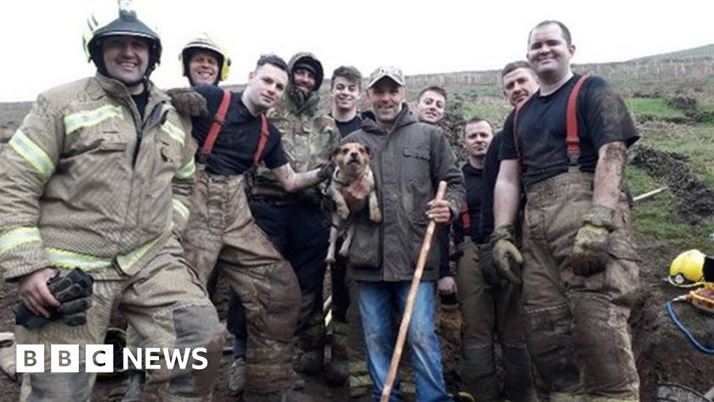 Firefighters Free Dog From Rabbit Hole